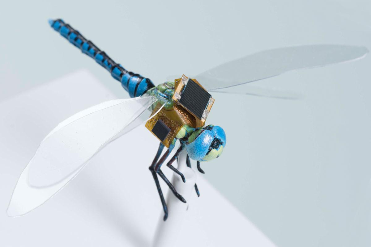 حشرات إلكترونية طائرة يمكن التحكم بها عن بعد